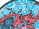 Nano-Sentinels/Gallery