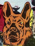 Wolf (Dog) (Earth-616) from Tex Taylor Vol 1 4 0001