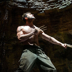Wolverine in a pit.