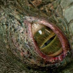 The Lizard's eye.