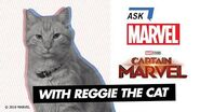 Goose the Cat of Marvel Studios' Captain Marvel Ask Marvel