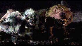 Resultado de imagem para hulk poodles