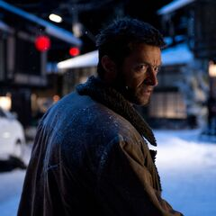 Wolverine in the snow.
