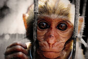 Hit-Monkey Pre