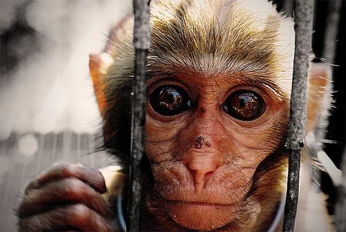 File:Hit-Monkey Pre.jpg