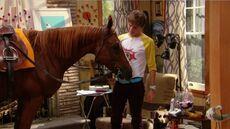 Horse atHome