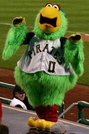 Pirate parrot pirates mascot