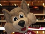Howler The Coyote