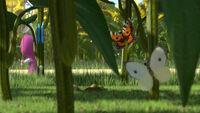 24 Маша и Бабочки
