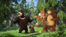 72 Медведь Тигр и Гималайский