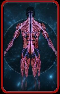 Codex MEA - Pathfinders Implants