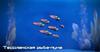ME3 Тессианская рыба-луна