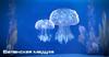 ME3 Беланская медуза