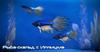 ME3 Рыба-скальд с Иллиума