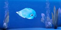 ME2 - Prejek Paddle Fish