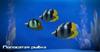 ME3 Полосатая рыбка