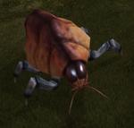 Ontarom Beetles