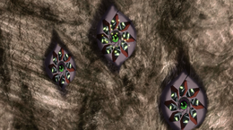 Fehl prime - cruiser eye defenses
