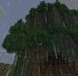 Sentinels Old Tree