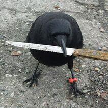 Knifebird