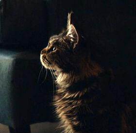 Мокси кошка телесериал