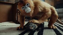 Золотая обезьяна сжимает Пантелеймона хорька телесериал