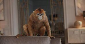 Золотая обезьяна квартира Колтер телесериал