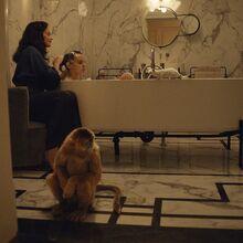Золотая обезьяна отворачивается в ванной телесериал