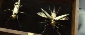 Летучие шпионы мухи в футляре