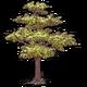 Символ алетиометра игра 5 Дерево