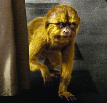 Золотая обезьяна постер фрагмент Франция