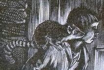Аста лемур Малкольм иллюстрация
