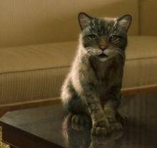 Пантелеймон в образе кота