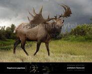 Megaloceros-giganteus-2017-738x591