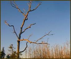 Swamp-tree-veins