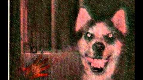 """Smile.dog"""