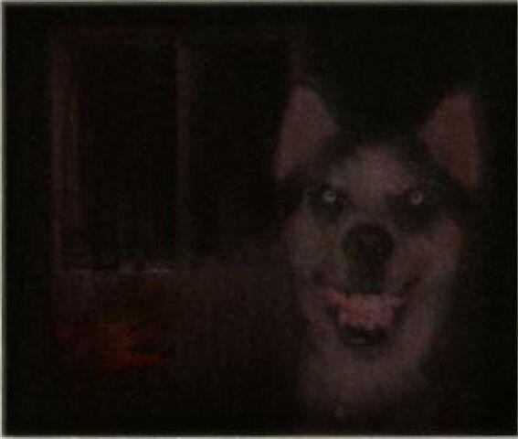 File:Smile Dog.jpg