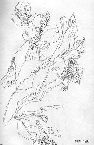 File:Orchids.jpg