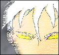 Thumbnail for version as of 21:03, November 11, 2008
