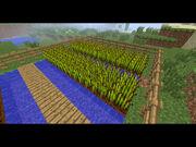 Basic MC Farm