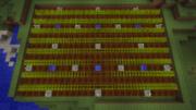 E Wheat farm