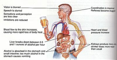 Alcohol effects