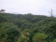 Lamanai area 2
