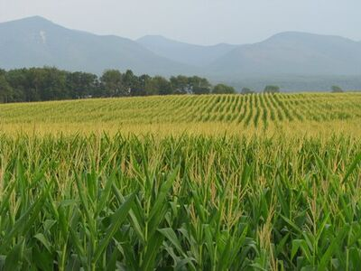 Grasslands of the East