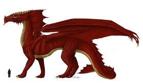 Dragon size