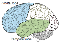 Frontal-Temporal Lobe