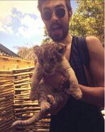 Kyle 50 lion