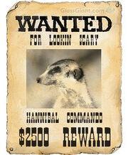 VYM059 JimBob Hannibal wanted