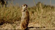 Tigi - Animals in Love