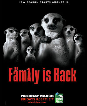 Meerkat Manor photo